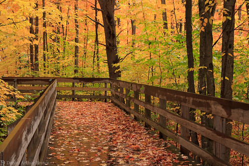 hartwickpinesstatepark mi michigan october upnorth autumn fall fallcolors fallfoliage footbridge landscape leafpeeping nature statepark travel grayling unitedstates us