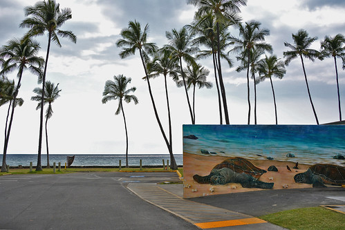 bigisland hawaii usa outdoor coast kailuakona travel waterfront seaside beach tropical sand ocean sea turtle streetview coastline mural painting