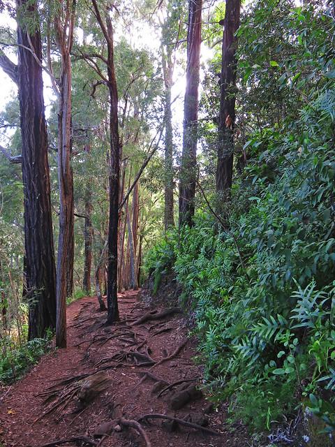 Hawaiian Hiking Trail