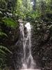 Gorgeous Waterfall PermaTree