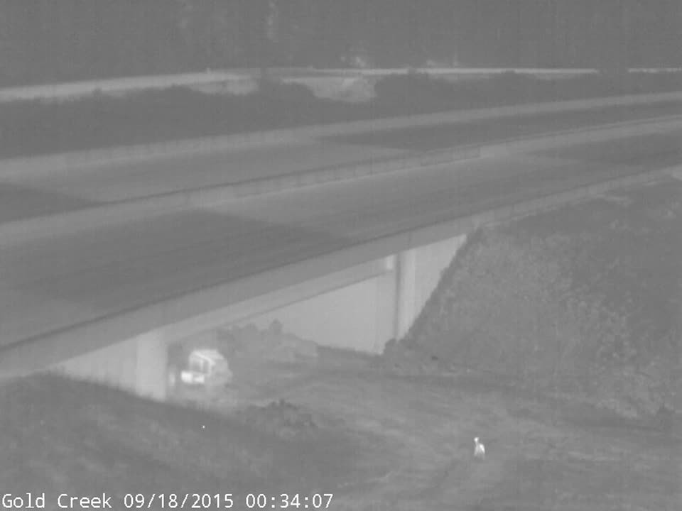 A series of deer moving under I-90
