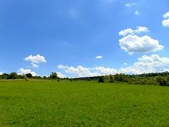 câmpuri și livezi/fields and orchards