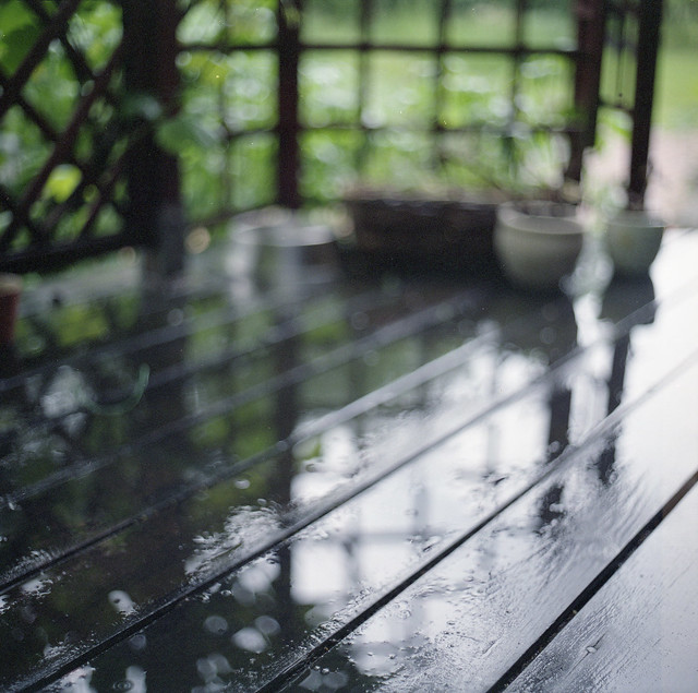 garden - impressions of a rainy day