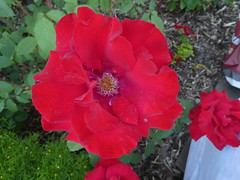 Flowers Missoula Montana RV Park (6)