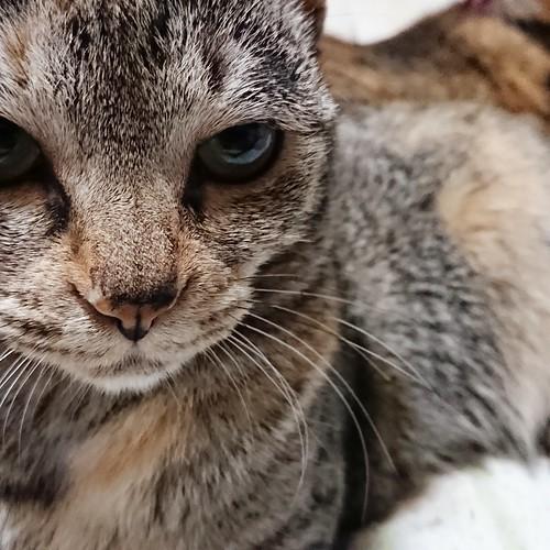 怒っています? by Chinobu