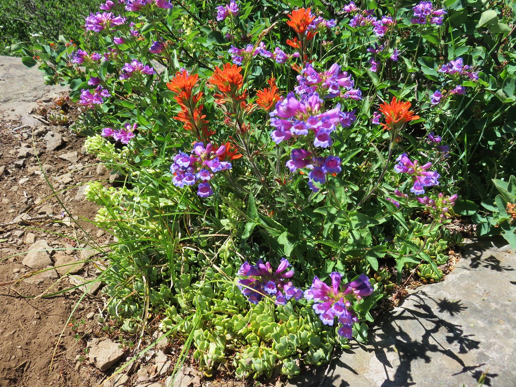 Wildflowers on Hawk Mountain