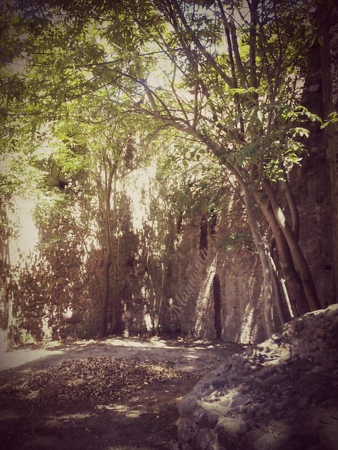 En la selva