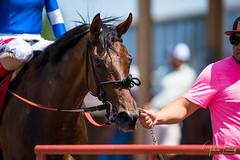 Winners - Horse With Every Hope & Jockey Sasha Risenhoover