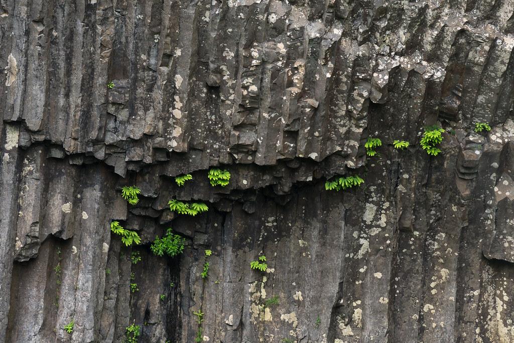 Ferns grown in columnar basalt at Latourell Falls in Oregon's Columbia River Gorge