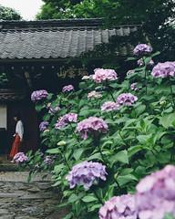 Photo:瑞雲山 本光寺 (Zuiunzan Honko-ji) By kzy619