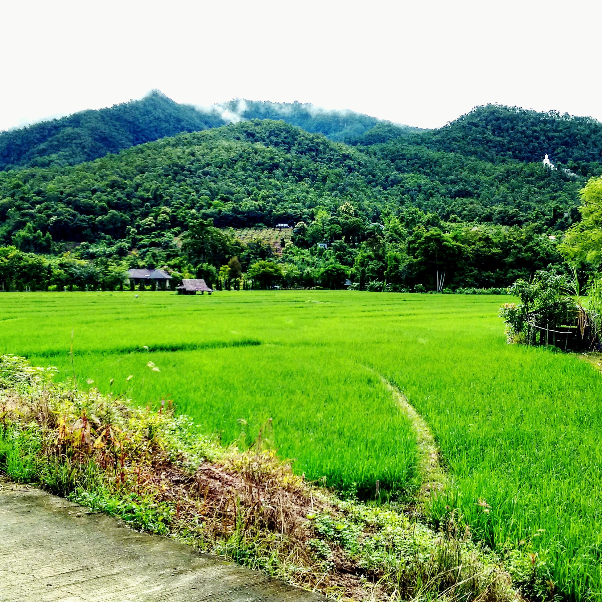 pai-ricefield-green-travel