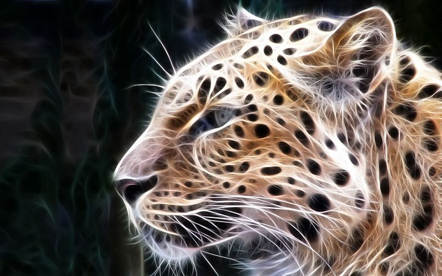 3d images - Animal wallpaper hd photos desktop free