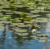 The lily pond (after Claude Monet ;)