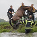 Paard te water by JaapWoets