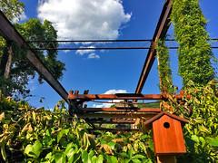 Birdhouse Among Ruins Occoquan (VA) June 2017