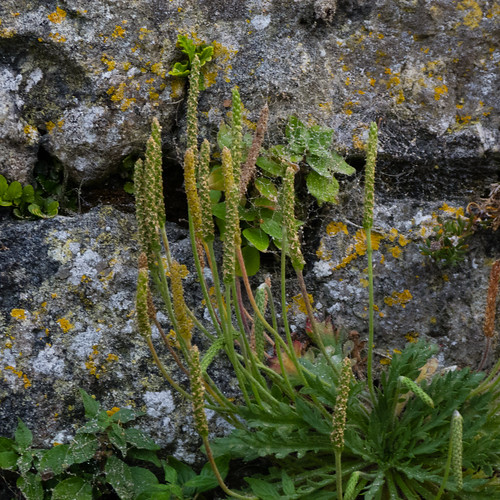 Growing on a granite wall