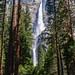 Yosemite Falls - Day 171 / 365 by Wayne~Chadwick