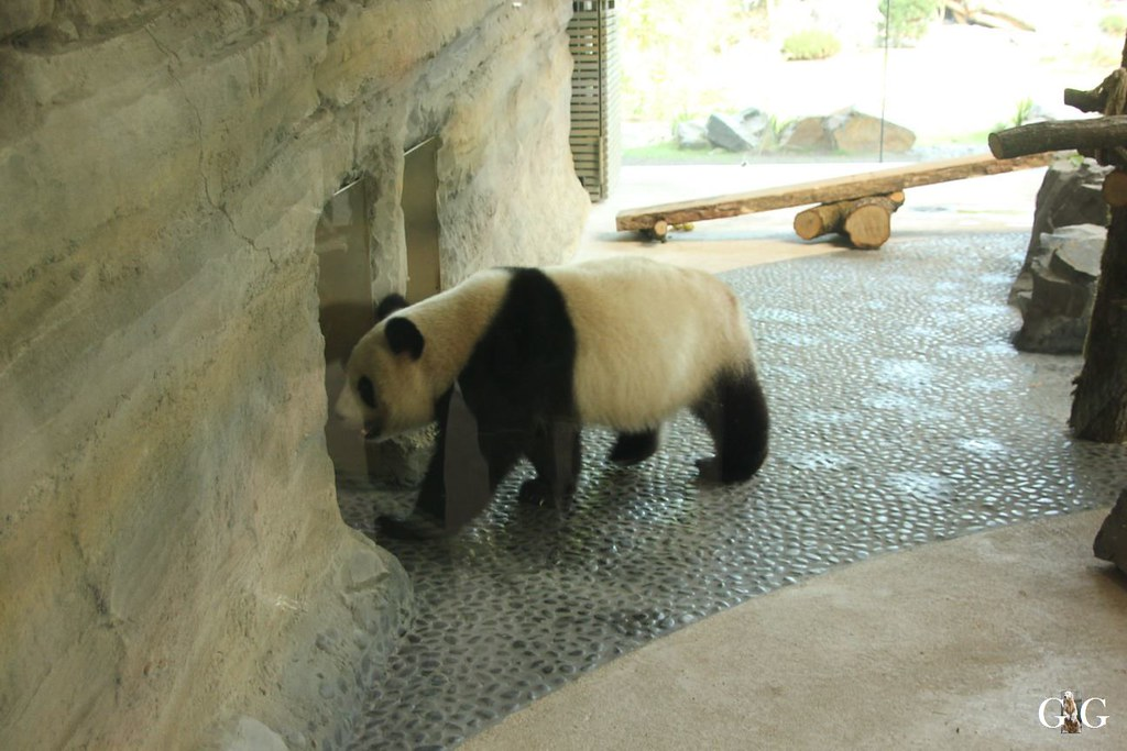 Zoo Besuch 11.07.201745