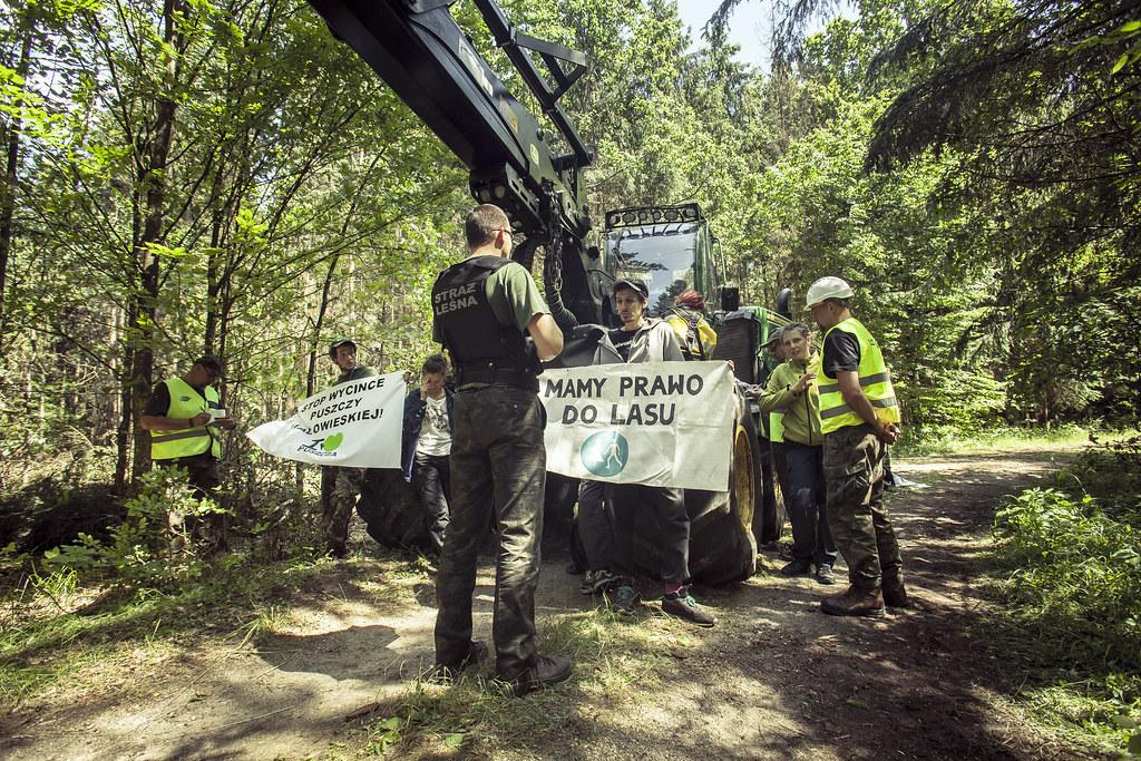 Piąta blokada wycinki w Puszczy Białowieskiej