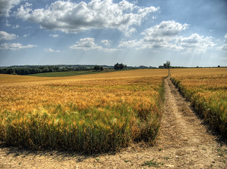 Path in the wheat, Winchester