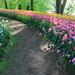 Make some Bloom for the Netherlands - vol.4