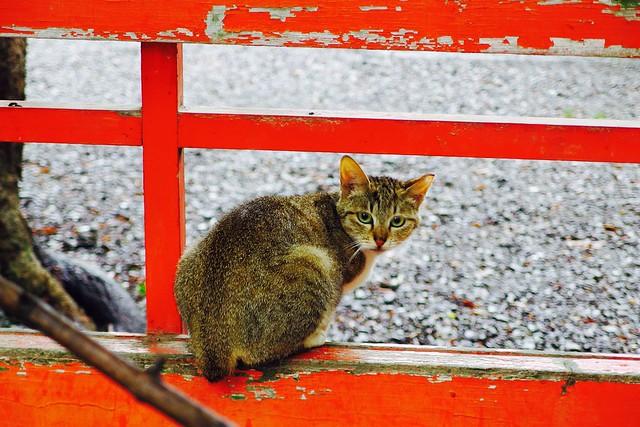 Today's Cat@2017-06-29