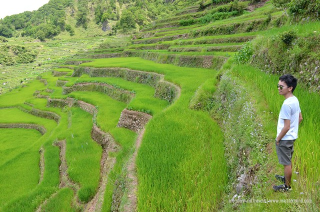 marxtermind at Maligcong Rice Terraces