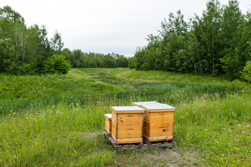 Petite visite de nos ruches 35048247234_1c7ef3220b_b