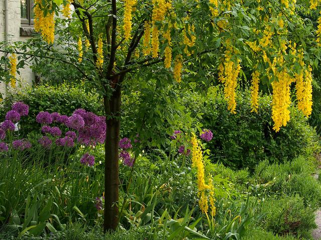 Urban garden. Riverdale, Toronto., Olympus E-M5, Lumix G Vario 45-200mm F4.0-5.6 Mega OIS