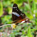 butterfly 7 por ikarusmedia