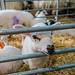 Whin Yeats Dairy - Open Farm Sunday - -4