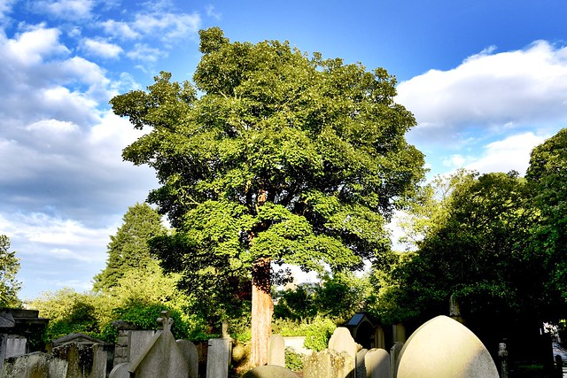 Second Life - St Machars Cemetery  Aberdeen Scotland 2017