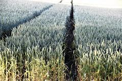 Wheat 24.07 (2)