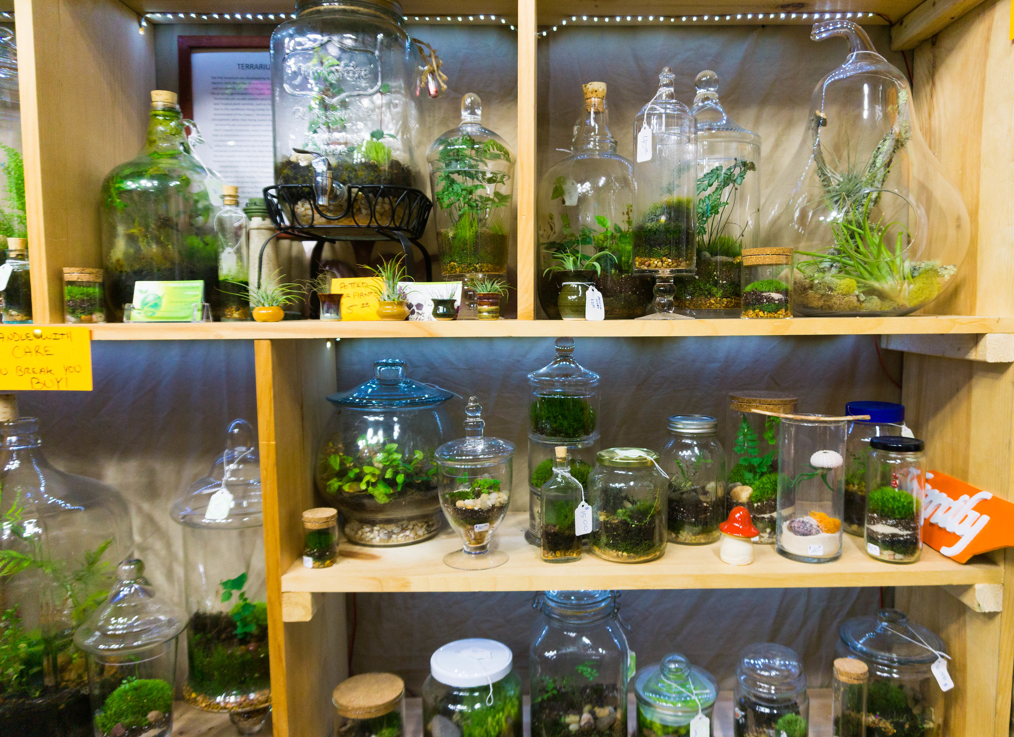 JD's Terrariums and More Located at Flea Traders Paradise in Sevierville, Tenn.