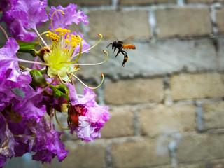 A por el polen!
