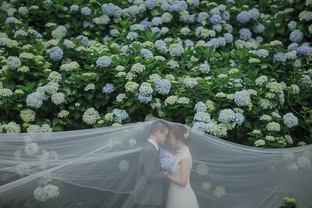 自助婚紗,Push,Vivian,陽明山,高家繡球花, Canon EOS-1D X, Canon EF 85mm f/1.2L II