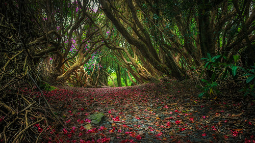 Into the woods....