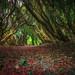 Into the woods.... by Einir Wyn Leigh