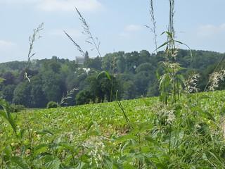 Le Mont Saint-Aubert (1)