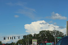 Dog in the sky