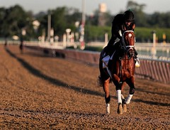 Patch❣My one & only pick for today's #belmontstakes ...Who's your fav🏇