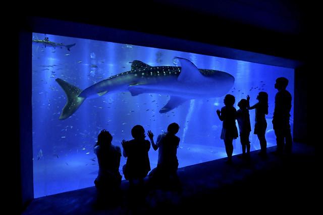のとじま水族館ジンベエザメ