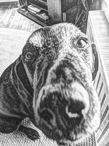 Duke, cartooned