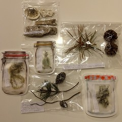 #naturepalexchange sent to @vanwill0007 📬WA➡️TX #pinecone #evergreen #pine #twig #moss #lichen #driftwood #seashells #barnacles in #kilnerjar & #jellyjar #ziplock #baggies ... #foundforaged #homeschool #jars #masonjar #canning