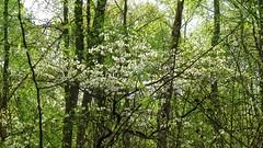 Chapman State Park Apr 14, 2017, 7-45 AM_sharing