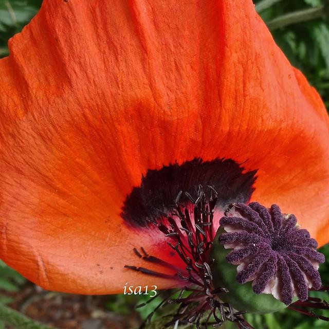 Petal and seed