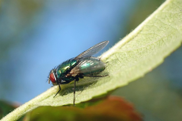 365 - Image 167 - Fly Friday...