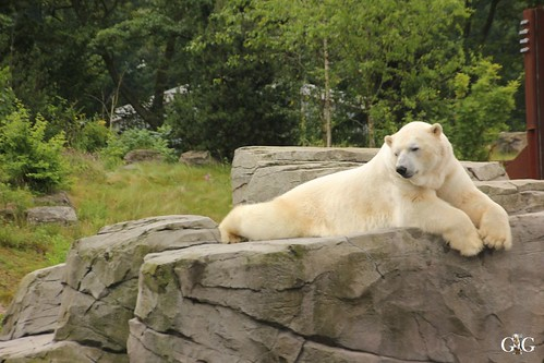 Besuch Zoo Hannover 25.06.20175