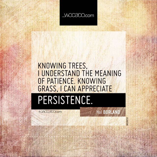 Knowing trees, I understand the meaning of patience by WOCADO.com