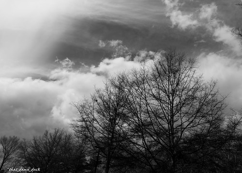 blackandwhite clouds landscape nature trees bw blackwhite
